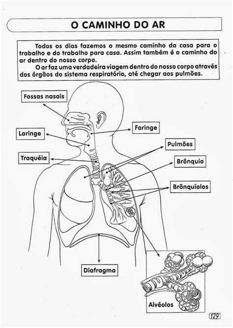 44 Atividades sobre Sistema Respiratório para Imprimir
