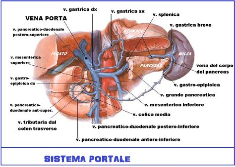 vena porta epatica cirrosi epatica caratteristiche della malattia diagnosi