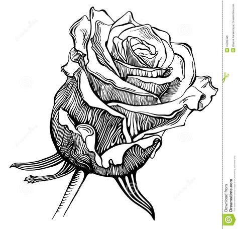 imagenes blanco y negro para estar el bosquejo digital blanco y negro del dibujo subi 243