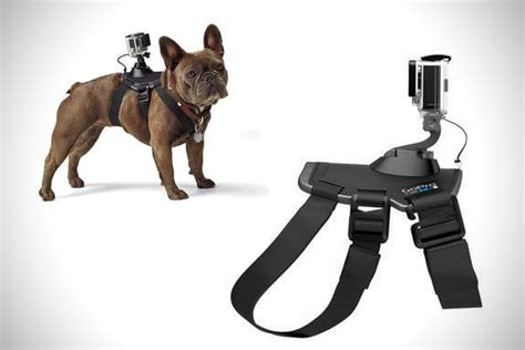 gopro harness gopro fetch harness hiconsumption