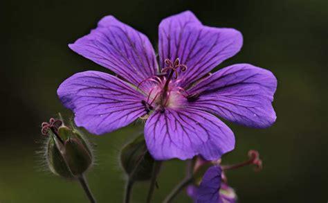 pistillo fiore foto gratis giardino viola luce diurna pistillo fiore