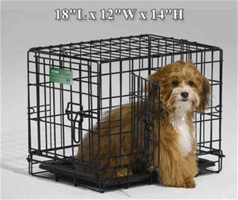 puppy using bathroom in crate midwest icrate double door dog kennel crate 1500 series