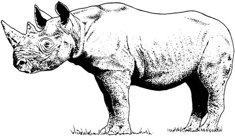 rhino coloring page rhinoceros printable coloring pages