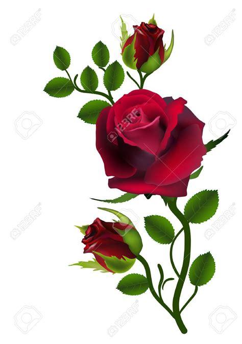 imagenes tres rosas tres rosas de color rojo oscuro fondo blanco