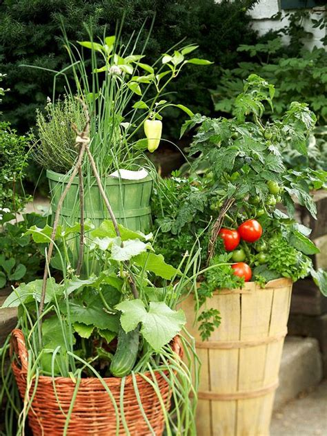 container vegetable gardening tips fresh ideas for growing vegetables in containers