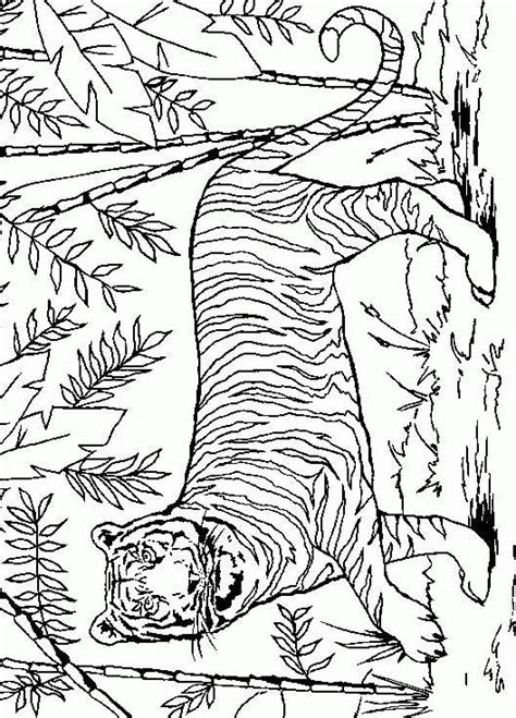 coloring pages siberian tiger tiger coloring pages coloringpages1001 com