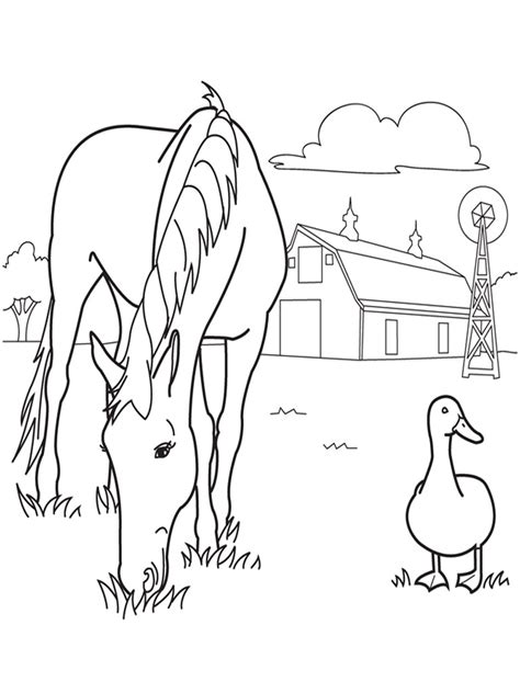 realistic farm animal coloring pages pinterest