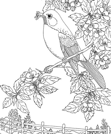 printable coloring pages of birds and flowers birds and flowers coloring pages 560679