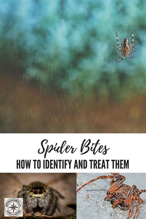 1000 ideas about spider remedies on roach