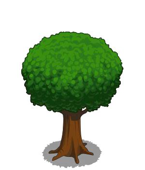 image oak tree medium icon.png frontierville wiki