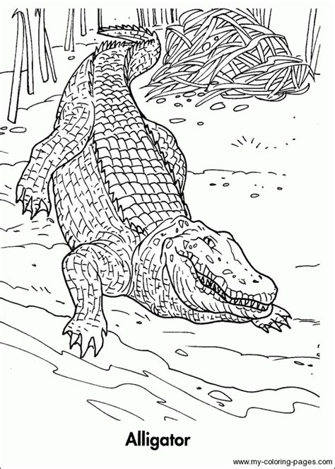 rain forest animals free coloring pages on art coloring