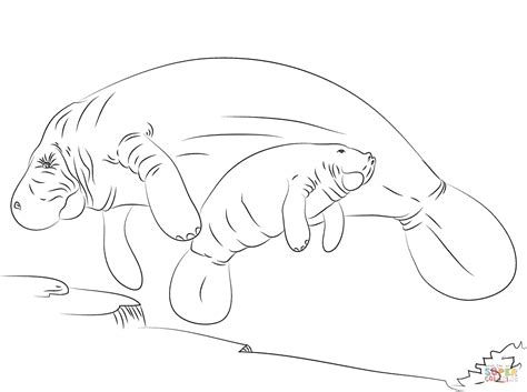 cute manatee coloring page coloring pages