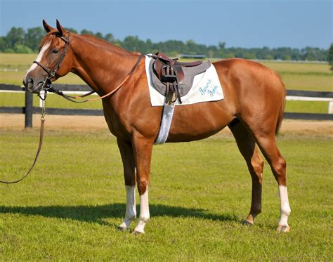horse saddle fenwick farm products