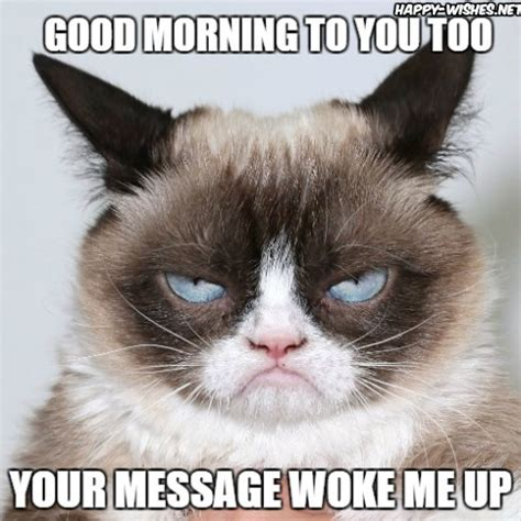 Angry Cat Meme Good - 15 good morning meme to him her friends happy wishes