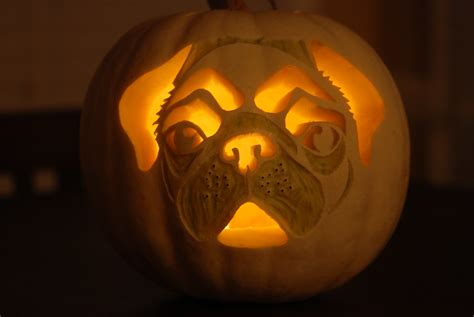 pug punkin  white pumpkin carved     pug
