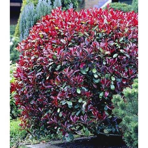 winterharte pflanzen für den garten immergr 252 ne str 228 ucher winterhart garten