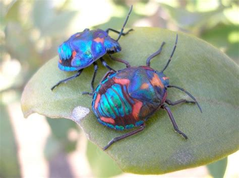 colorful names colorful insects colourful bugs colors insects