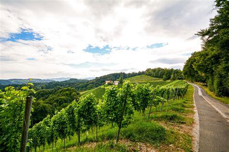 austria wine regions travel information