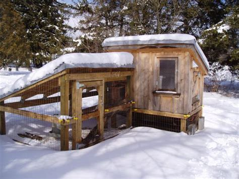 backyard chickens in winter coop in the winter backyard chickens community