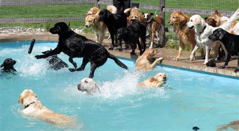 puppy pool this is what a pool pawty at a daycare center looks like bored panda