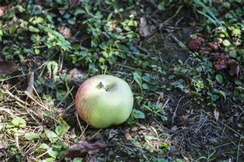 apples fall   tree learn