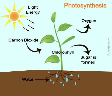 photosynthesis diagrams differences and similarities between chemosynthesis and