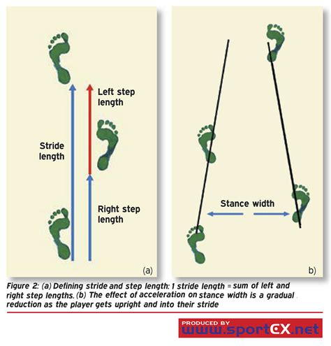length of defining stride and step length 1 stride length sum of flickr