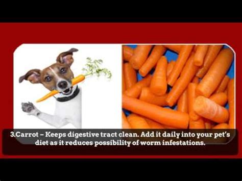 how to deworm a puppy naturally how to give your a tablet or worming pill funnydog tv