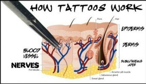 how your body reacts when you get tattoos