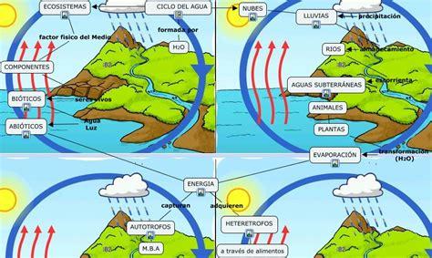 cadenas troficas y ciclos biogeoquimicos ciclos agua
