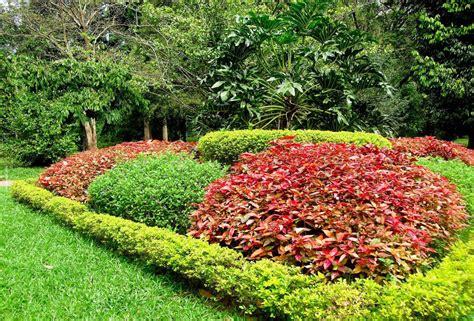 Peradeniya Botanical Garden Botanical Garden Peradeniya Splendor Of Sri Lanka