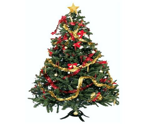 preserving your christmas tree