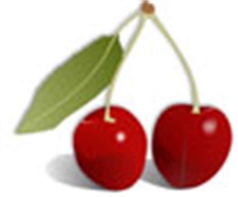 kirschen wann reif kirschen andicken obst kirschen so 223 e einfrieren fr 252 chte