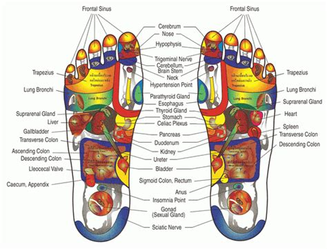 Foot reflexology course chinese culture club shanghai