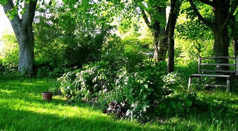 shade vegetable garden vegetables that grow well in the shade green home guide