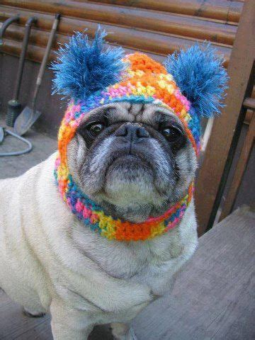 different colored pugs 17 best images about pug on colors and therapy dogs