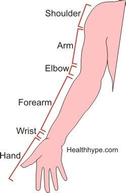 sections of the arm arm pain types symptoms diagnosis healthhype com