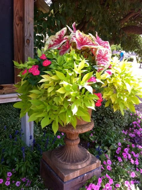 Ideas For Container Gardens Container Gardening Ideas Savingourboys Info