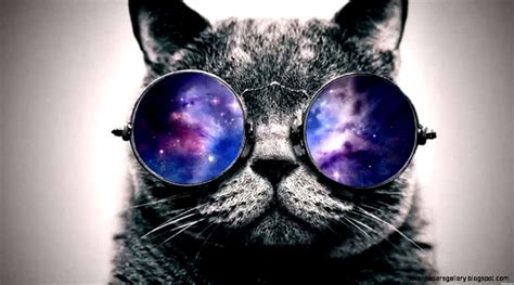 wallpaper cat with sunglasses funny wallpapers tumblr group 50