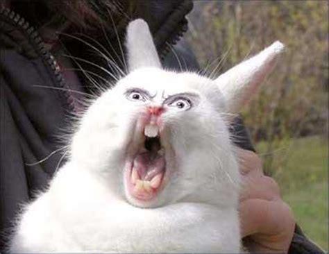 Angry Bunny Meme - zfrustrowany kr 243 lik lolx śmieszne zdjęcia
