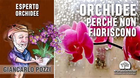 perch 233 le orchidee non fioriscono