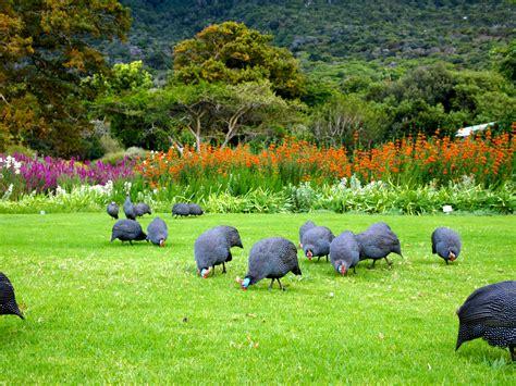Kirstenbosch Botanical Gardens Kirstenbosch Botanical Gardens Fabulous 50 S