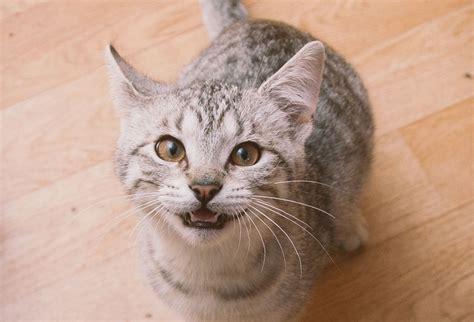 wann katzen impfen wenn katzen abwandern katzen magazin