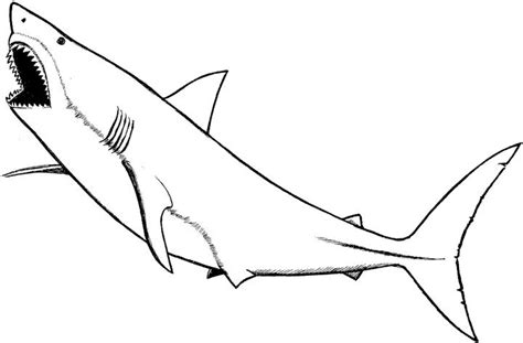 free coloring pages of tiger shark