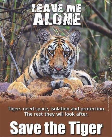 tiger quotes tiger quotes tiger sayings tiger picture quotes