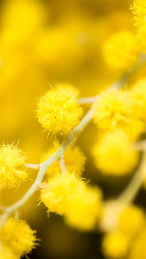 Iphone Wallpaper Yellow Flowers | hazy yellow flowers iphone 6 wallpaper hd iphone 6 wallpaper