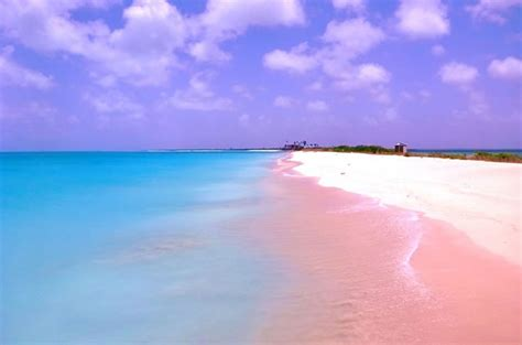 beaches with pink sand pink sands harbour island bahamas feel the planet