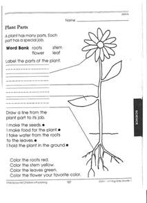 1st grade science worksheets picking apart plants
