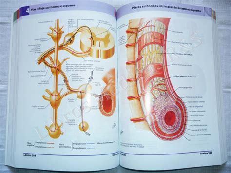 imagenes netter pdf atlas de anatomia humana netter pdf gratis
