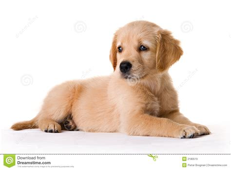 free puppy puppy stock image image of background humor adorable 2180519